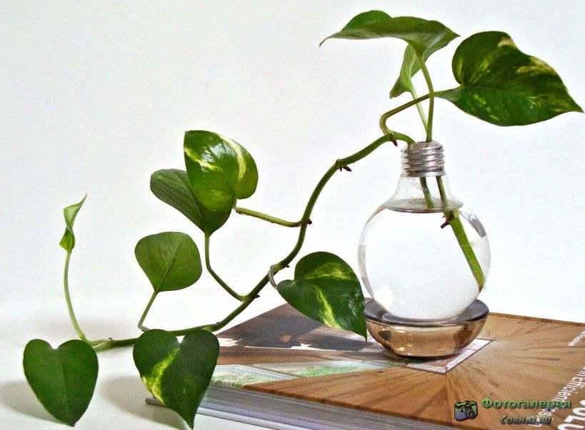 Идеи для дома своими руками