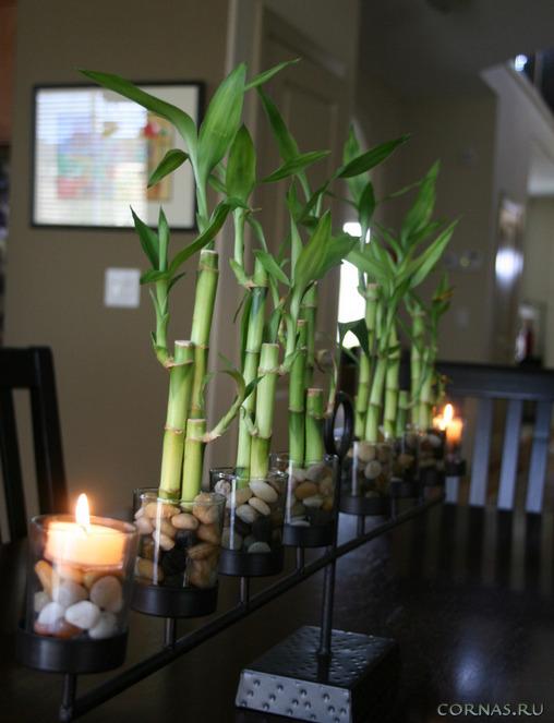 Бамбук в интерьере квартиры - оформление, дизайн